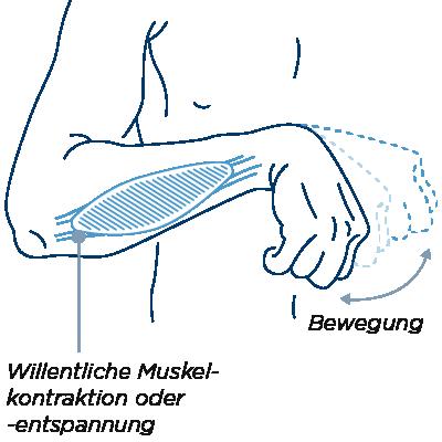 Uneingeschränkte Muskelkontraktion